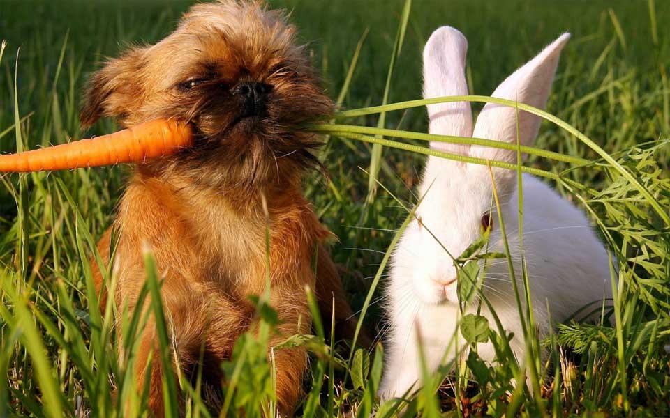 Можно ли давать собакам морковку